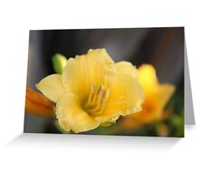 It's a Beautiful Day(lily) Greeting Card