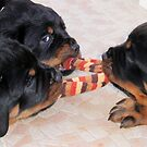 Three Rottweiler Puppies In A Tug Of War by taiche