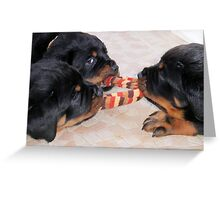Three Rottweiler Puppies In A Tug Of War Greeting Card