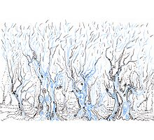 Line Forest Photographic Print