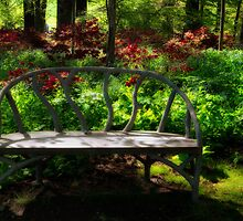 Bench in  the Azalea Garden by KellyHeaton