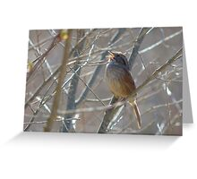 Singing Sparrow Greeting Card