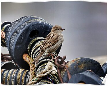 Sparrow At The Harbour by lynn carter