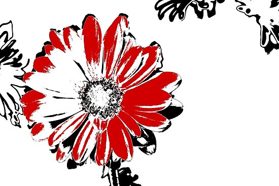 Gerbera - Black White And Red Series by Betty Northcutt
