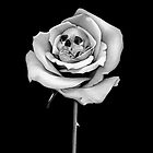 Dead Rose by SpatArt