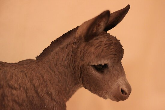 DONKEY CLOSE-UP by Jack Catford