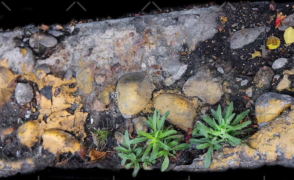 Street Art...Life on The Ground by Heather Friedman