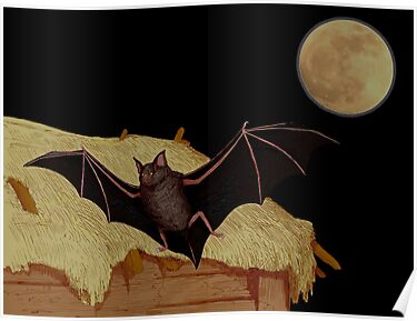 The Bat. by albutross