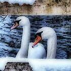 Two swans in the snow by Avril Harris
