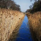 Holme Fen Dyke by Avril Harris
