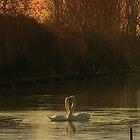 Love Birds by Avril Harris