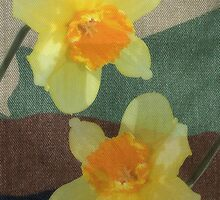 Bi Colour Daffodils by Avril Harris
