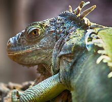 The Reptilian by Glen Allen
