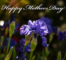 Happy Mothers Day Bearded Iris  by Deborah McGrath