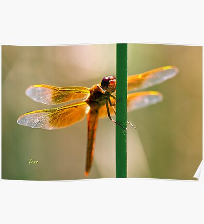 Orange Wings Poster