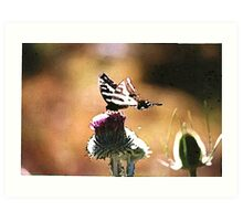 Butterfly on a Thistle Art Print