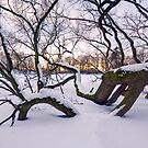Fallen Giant, Winter by Keld Bach