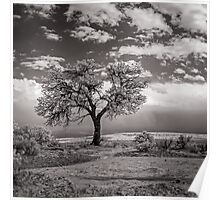 The Last Tree (square crop) Poster