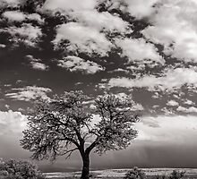 The Last Tree by Zero Dean