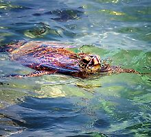 Honu... by Tracie Louise