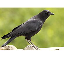 Crow on the Fence Photographic Print