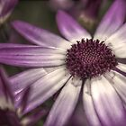 HDR Senetti #2 by Andrew Pounder