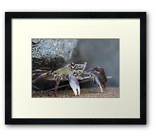 Crabs - Mooloolaba Headland Framed Print
