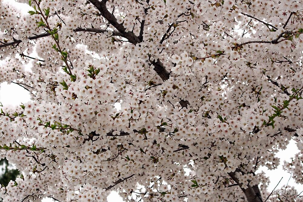 Spring flower by henuly1