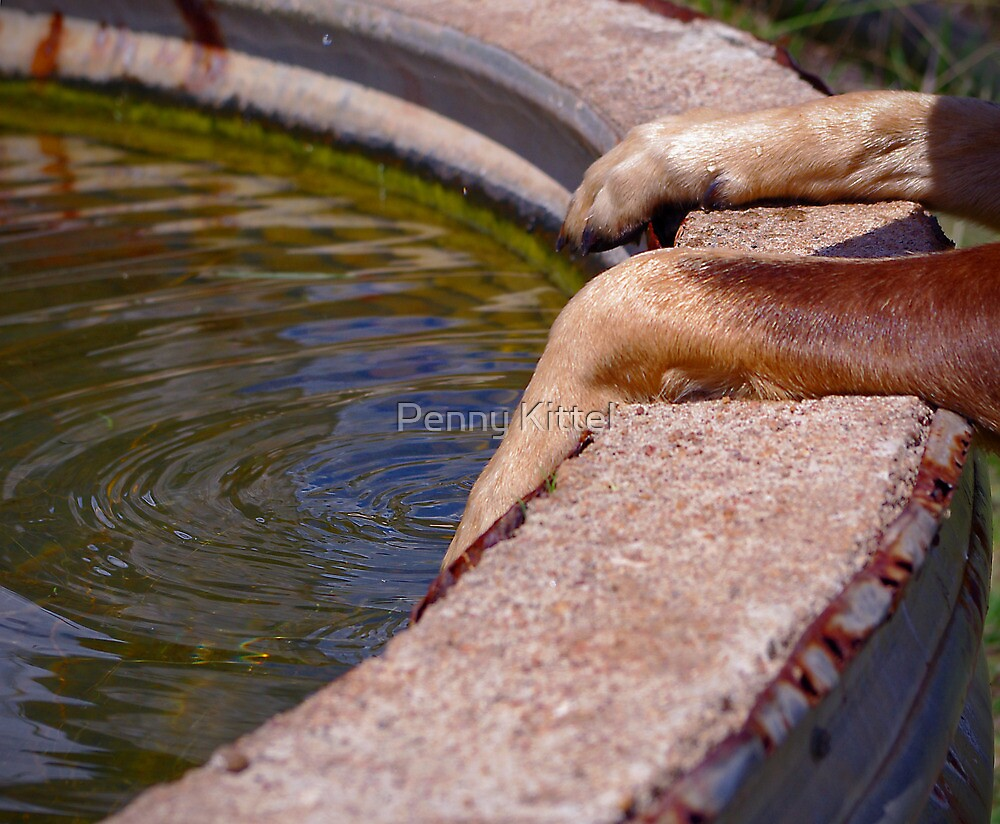 Paws for water by Penny Kittel