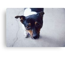 Sweet Little Dog Canvas Print