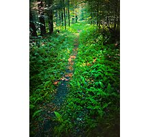 Arnold Mountain Trail Photographic Print