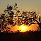 Sunrise @ Koroit QLD Australia  by Liza Barlow
