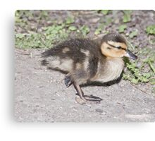 DUCKLING 1 Canvas Print