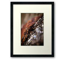 """rusty"" tree fungus Framed Print"