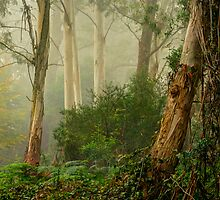 Textures 2  - Mount Wilson - NSW  - The HDR Experience by Philip Johnson
