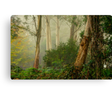 Textures 2  - Mount Wilson - NSW  - The HDR Experience Canvas Print