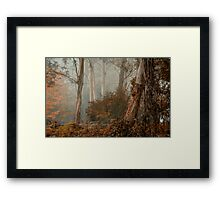 Textures - Mount Wilson - NSW  - THE HDR Experience Framed Print
