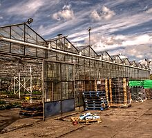 Greenhouse by Andrew Pounder