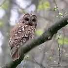 Tawny Owl by Richard Greenwood