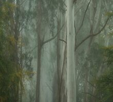 Giants  (Vertical Panoramic) - Mount Wilson NSW - The HDR Experience  by Philip Johnson