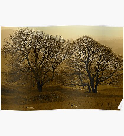 Trees, sheep and peak District Poster