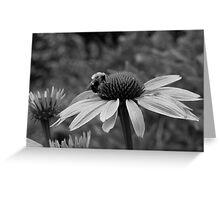 echinacea bee Greeting Card