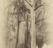 Mount Wilson - The Sepia Series #1 - Mount Wilson NSW  - The HDR Experience by Philip Johnson