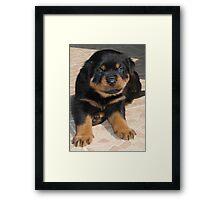 Rottweiler Puppy With Perplexed Facial Expression Framed Print