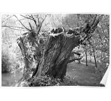 monochrome tree trunk Poster