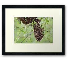 Honey Bee Swarm Framed Print