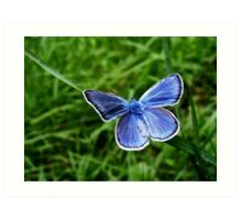 The Amanda's Blue butterfly Art Print
