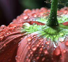 Muted Poppy  by Lynn Gedeon
