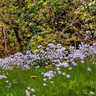 Meadow by gardencottage