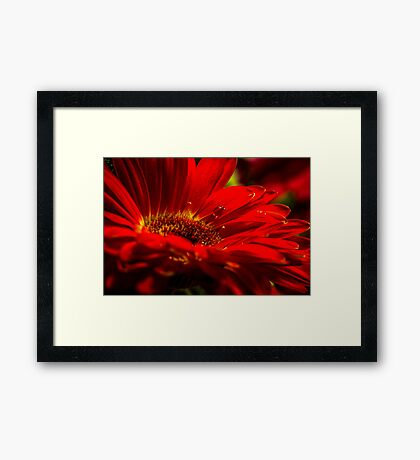 Flower with Water Drop Framed Print